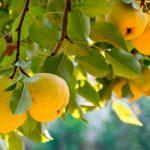 Фото 47: Фото плодов