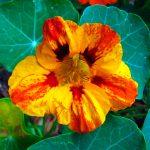 Фото 38: Фото цветка