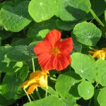 Фото 41: Цветы