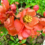 Фото 60: Цветёт