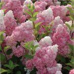 Фото 1: Винила фрайз цветок