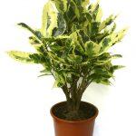 Фото 12: Горшечные растения