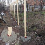 Фото 12: Деревянный столбы - забор
