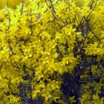 Фото 29: Жёлтая