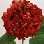 Фото 49: Красная гортензия