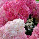 Фото 8: Цветок