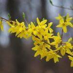Фото 16: Натуральный цветок