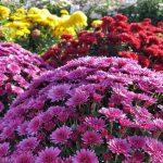 Фото 11: Многолетние цветы фото