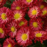 Фото 12: Многолетние цветы