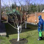 Фото 23: Опрыскивание сада