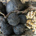 Фото 7: Орех чёрный грецкий