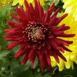 Фото 35: Фото цветка