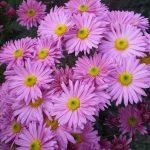 Фото 36: Фото цветов