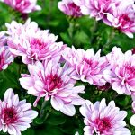 Фото 51: Цветы