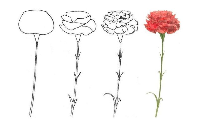Как нарисовать гвоздики на 23 февраля поэтапно