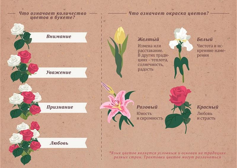 Количество и окраска цветов