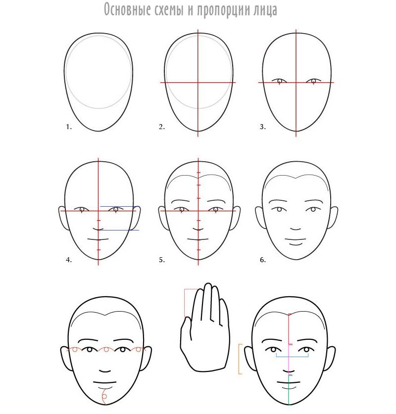 Нарисовать портрет по пропорциям
