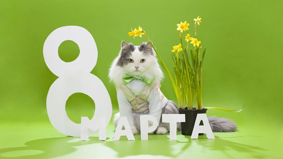 Котик поздравляет с 8 марта