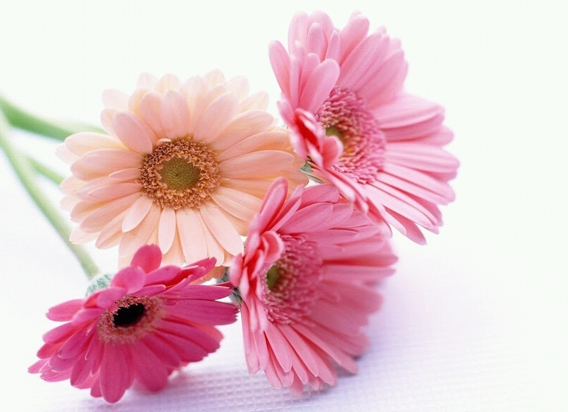 Примета четное количество цветов