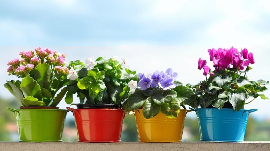 Подарок цветы в горшках на 8 марта