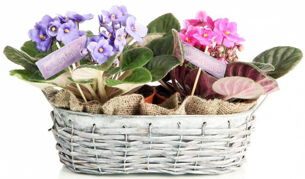 Подарок корзинка с филаками на 8 марта