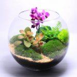 Фото 120: Оригинальный подарок на 8 марта флорариум с орхидеей