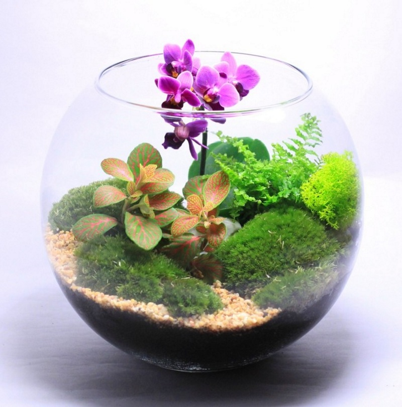Оригинальный подарок на 8 марта флорариум с орхидеей