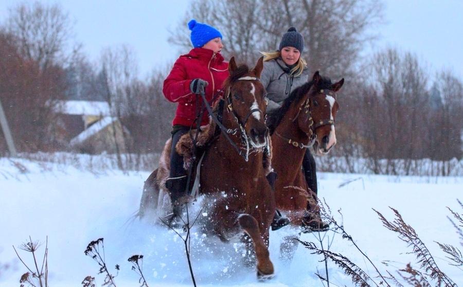 Конные прогулки для детей на 23 февраля