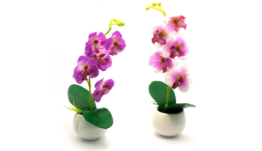 Орхидеи феленопсис в подарок
