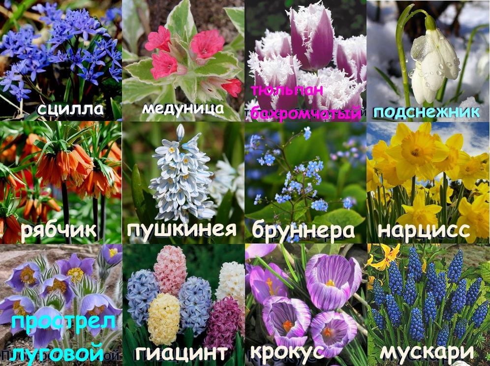 Виды весенних первоцветов