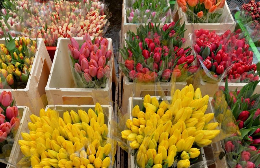 Разнообразие тюльпанов по видам и оттенкам