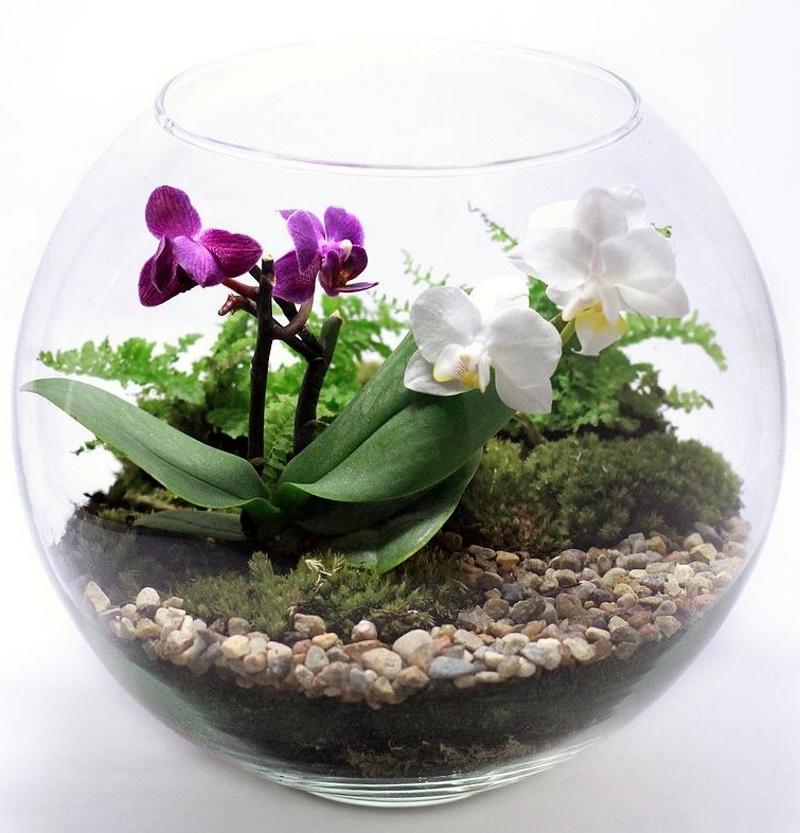 Красивый флорариум с орхидеей