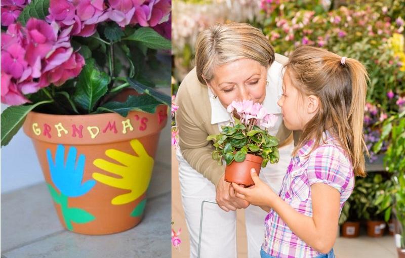 Комнатные цветы бабушке в подарок на 8 марта