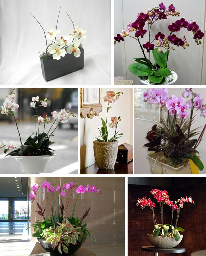Оформление орхидей в интерьере