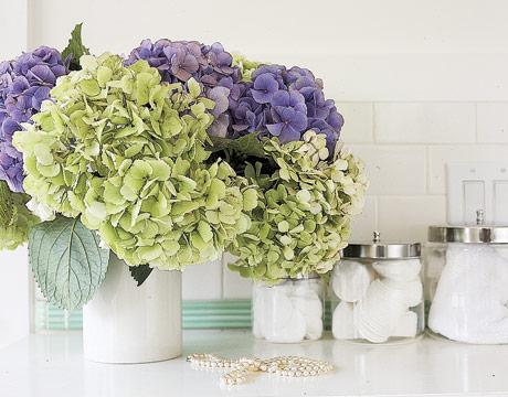 цветы в ванную комнату фото