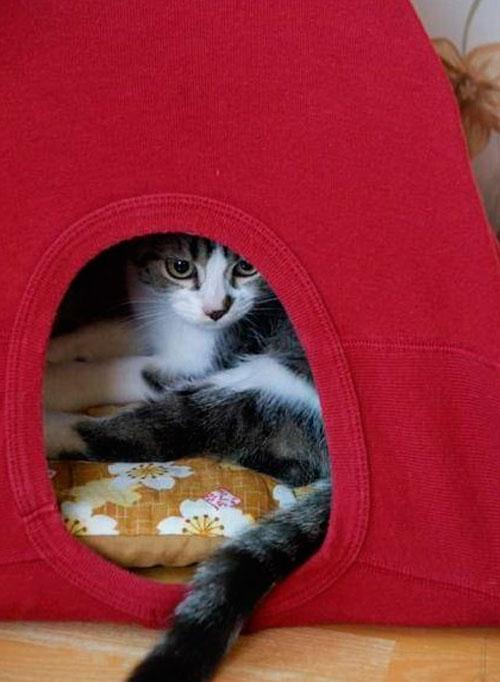 Домик для кошки своими руками из майки