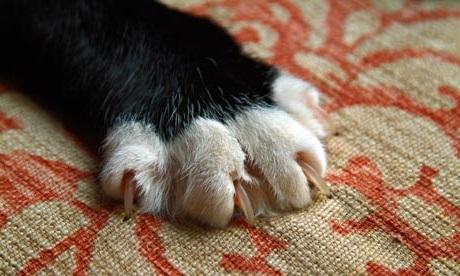 Когти кошек
