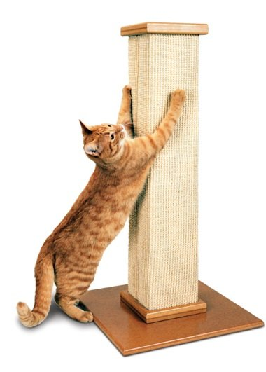 Кошка точит когти