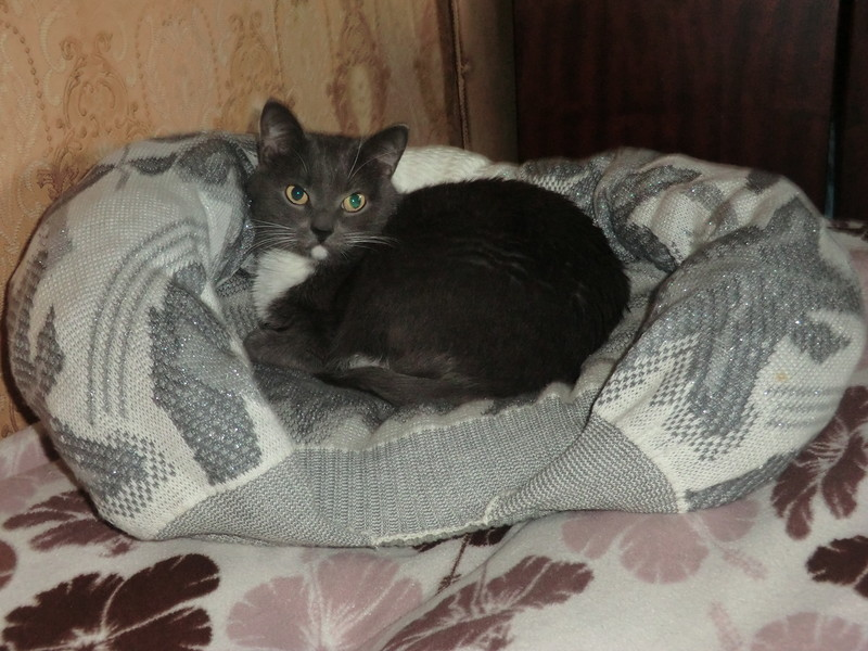 Лежанка- подушка для кошки с бортиками и небольшим углублением