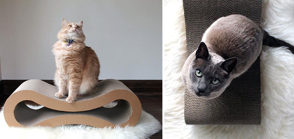 Современные лежанки для кошек с твердой поверхностью