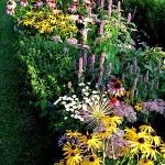 Фото 208: Цветы в клумбе