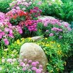 Фото 224: Цветочная клумба на даче