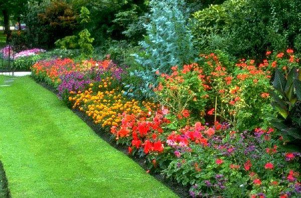 Красивая клумба с яркими цветами