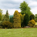 Фото 13: Поле с деревьями