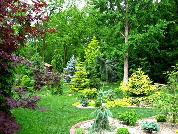 Средние хвойные деревья