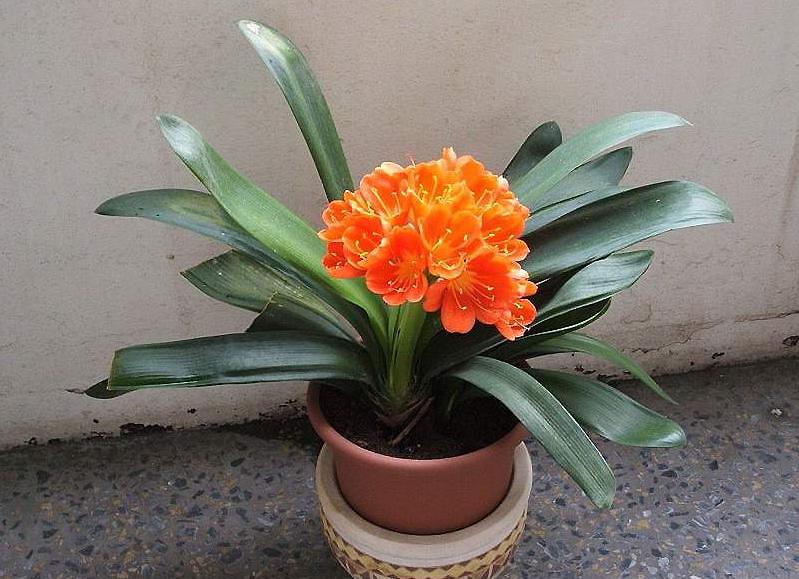 Комнатные нецветущие растения уход 38