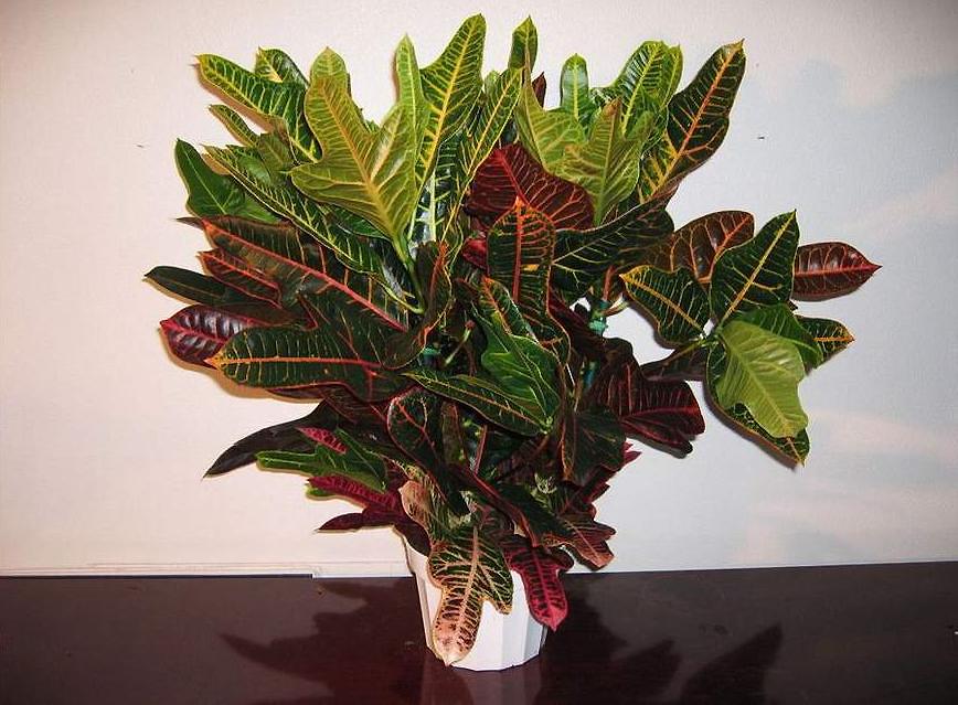 Фото домашних нецветущих цветов с названиями 88