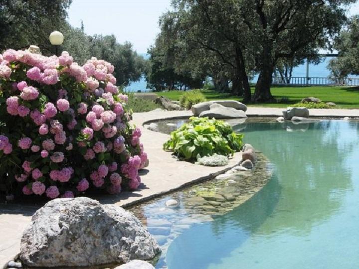 Красивый сад гортензий