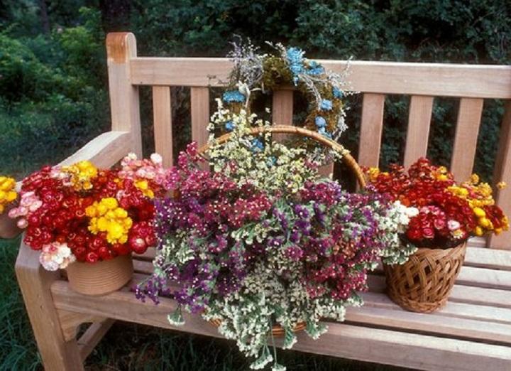 Астровые цветы фото с названиями