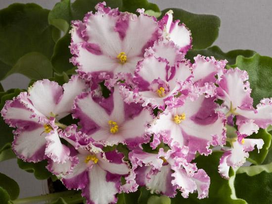 бахрома на цветках